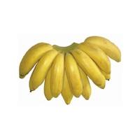 banana-ouro