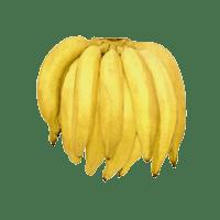 banana-terra1